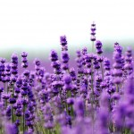 Are-there-essential-oils-that-have-the-best-quality-francine-brown-dot-com