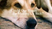 Could our house be making us sick?