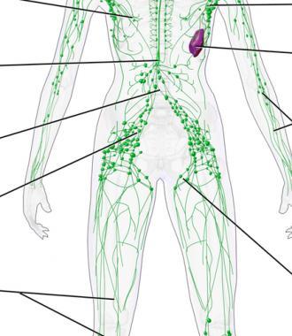 lymphatic-system-1110x500
