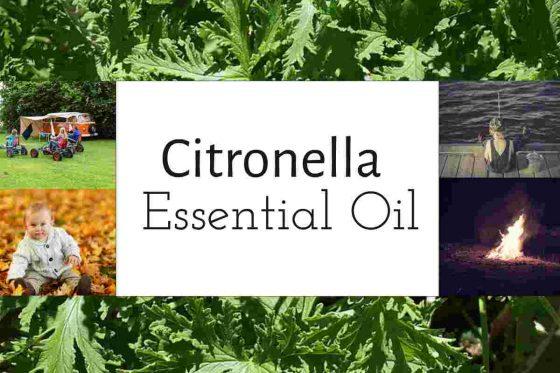 Citronella-Essential-Oil-francine-brown-dot-com