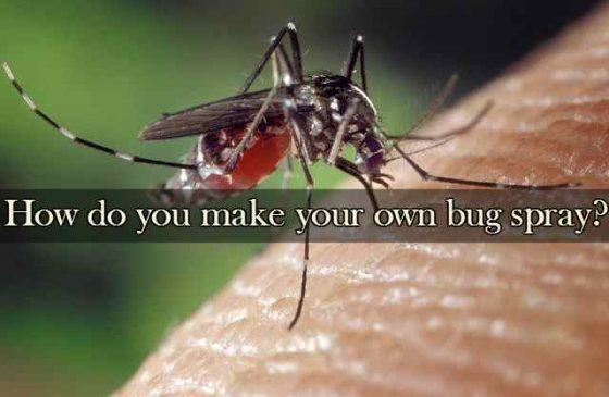 how-do-you-make-your-own-bug-spray-francine-brown-dot-com