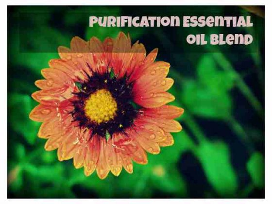 purification-essential-oil-blend-francine-brown-dot-com