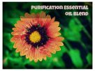 Purification Essential Oil Uses in your home