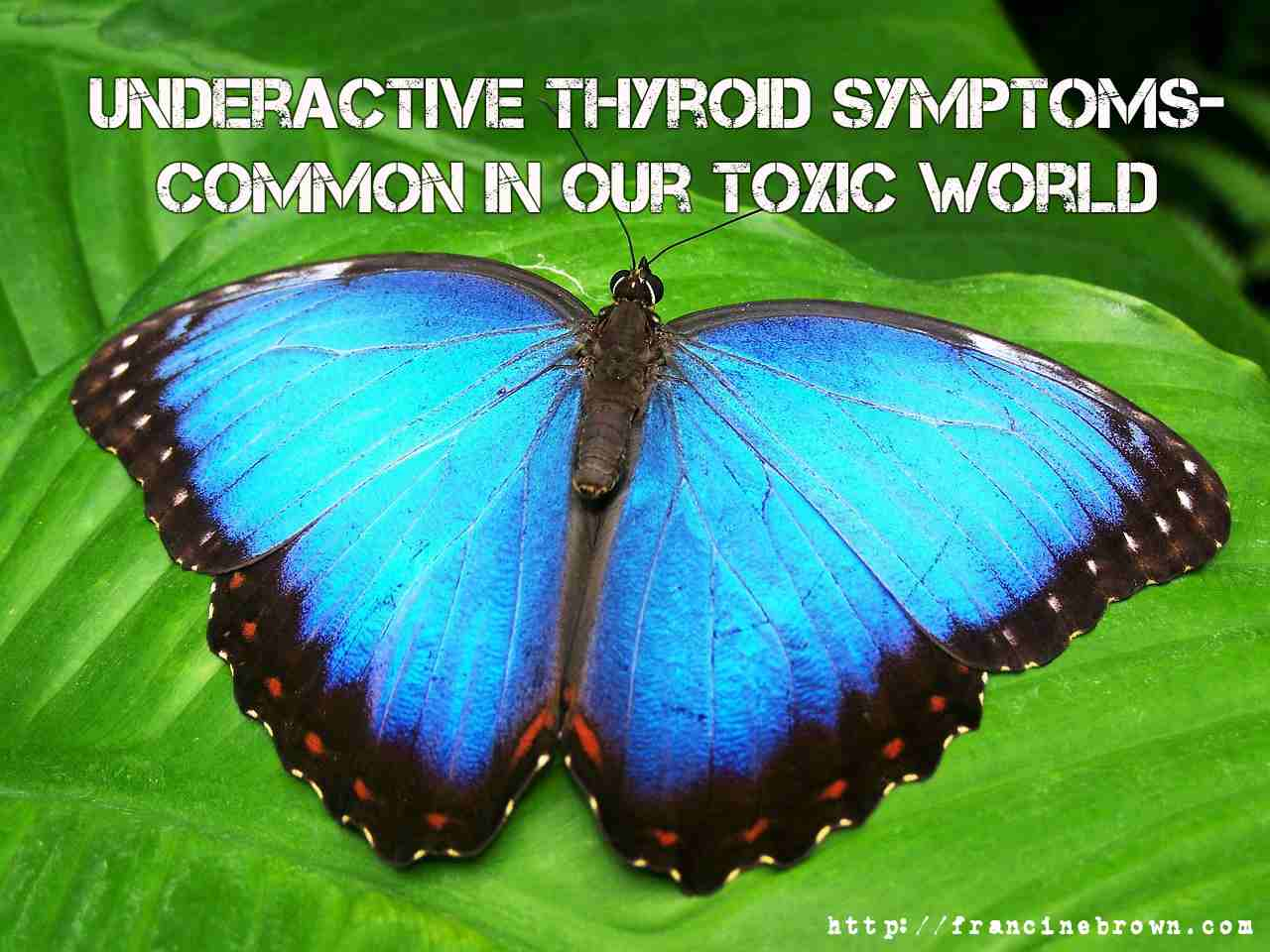 Underactive Thyroid symptoms Common in Today's  World